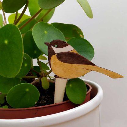 Cadeau original plante verte