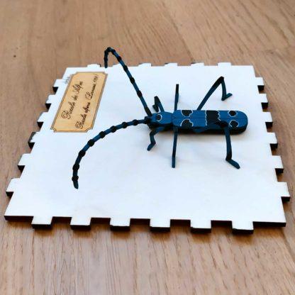 encadrement insecte